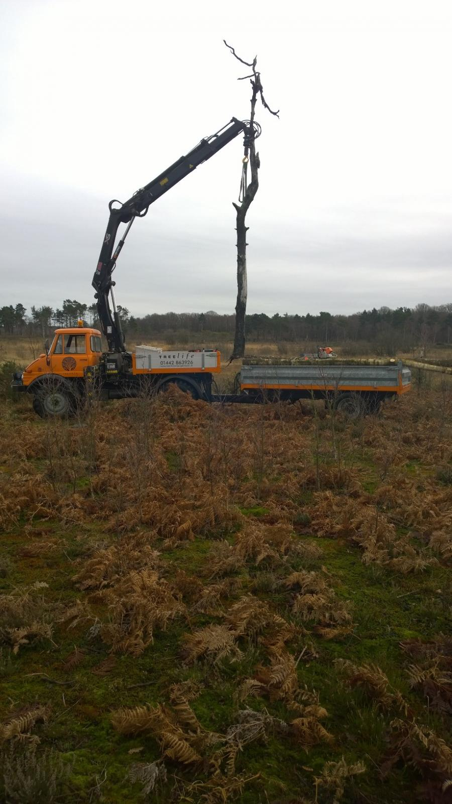 crane-on-hankley-common.jpg